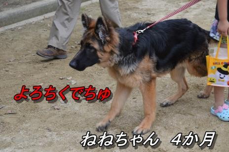 DSC_0001_20130624101427.jpg