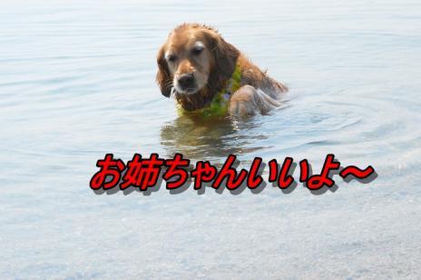 DSC_0029_20130511212532.jpg