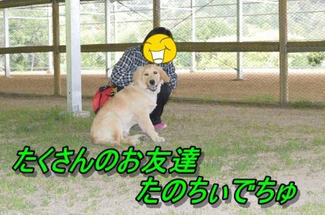 DSC_0038_20130501225057.jpg