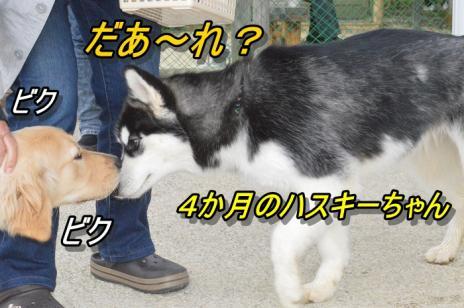 DSC_0060_20130501225051.jpg