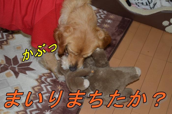 DSC_0062.jpg