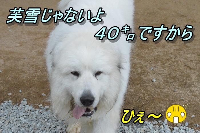 DSC_0067_20130501225416.jpg
