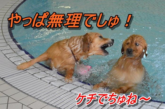 DSC_0069_20130607222011.jpg