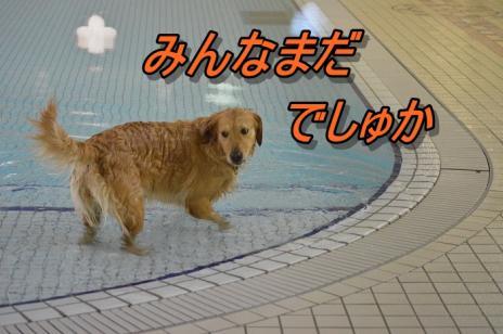 DSC_0082_20130501225413.jpg