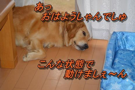 DSC_0095_20130624090841.jpg