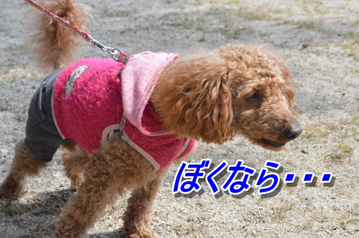 DSC_0105_20130511212743.jpg