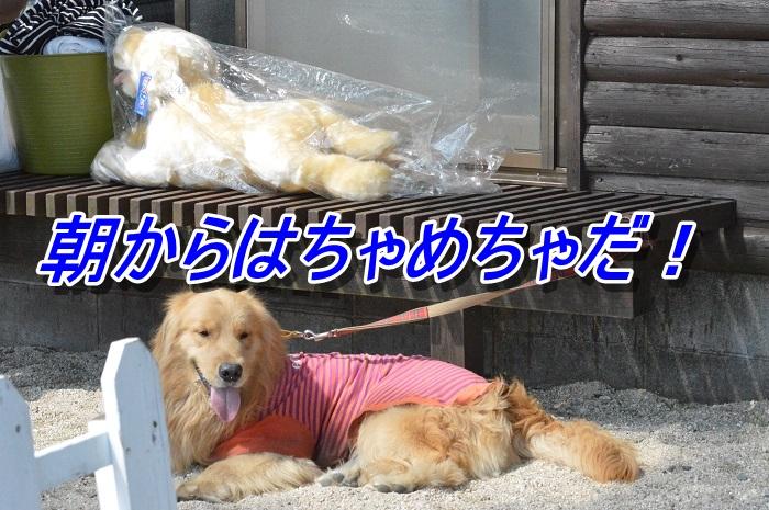 DSC_0106_20130511212742.jpg