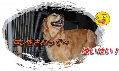 DSC_0107_20130624225645.jpg