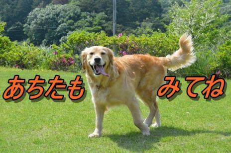 DSC_0114_20130525213834.jpg