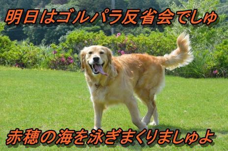 DSC_0114_20130608223652.jpg