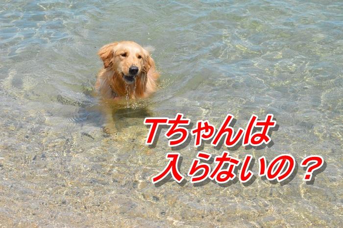 DSC_0144_20130507114319.jpg
