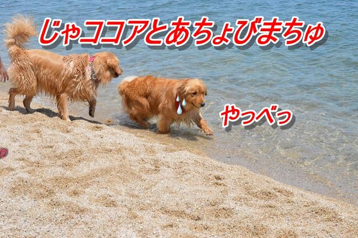 DSC_0145_20130507114426.jpg