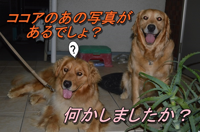 DSC_0145_20130703224332.jpg