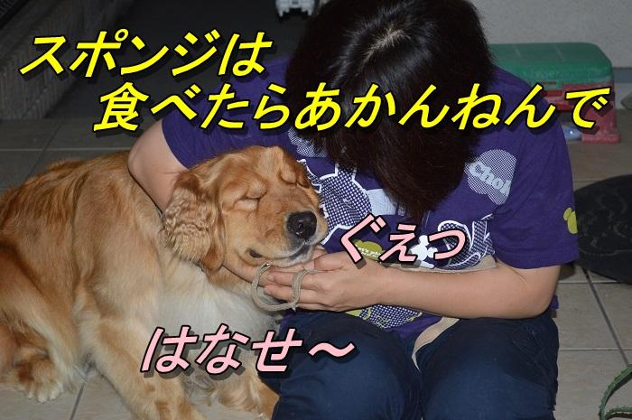 DSC_0156_20130703224331.jpg