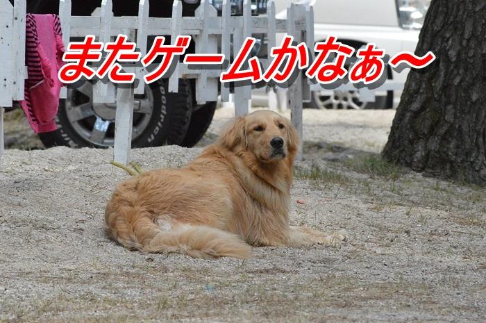DSC_0162_20130512154739.jpg