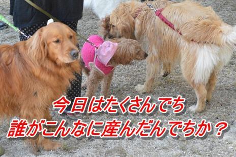 DSC_0164_20130507174248.jpg