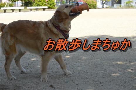DSC_0166_20130518202445.jpg