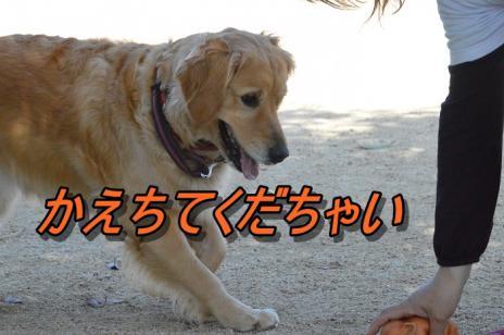 DSC_0168_20130518201706.jpg