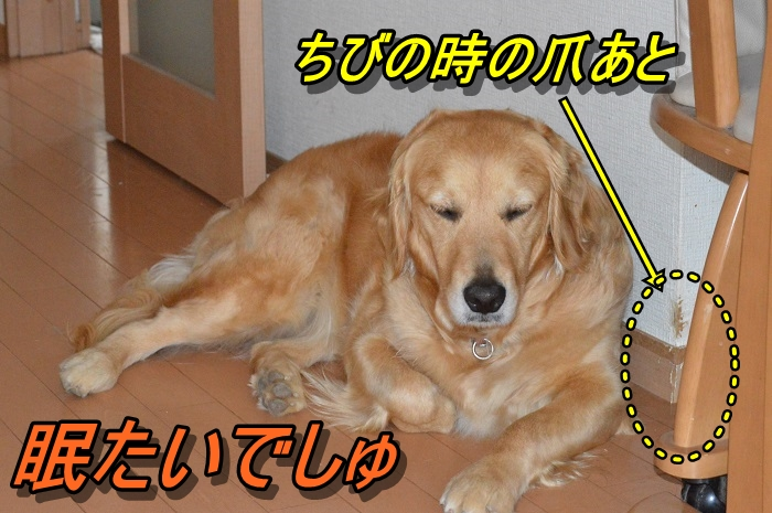 DSC_0187_20130605224739.jpg