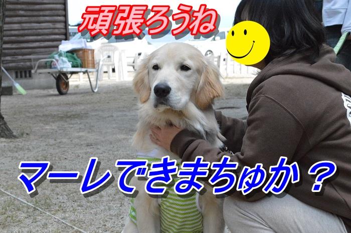 DSC_0198_20130512223729.jpg