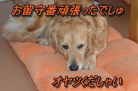 DSC_0198_20130605224803.jpg