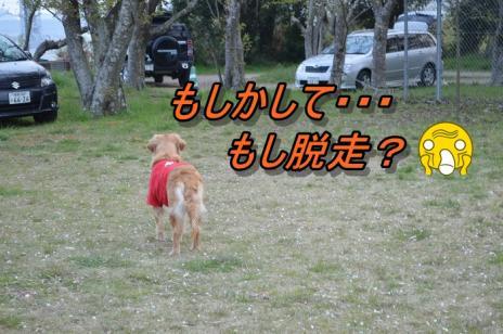 DSC_02177.jpg