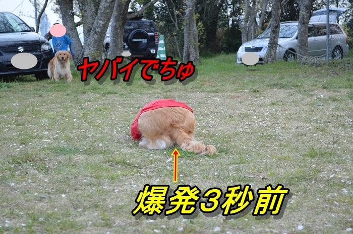 DSC_02200.jpg