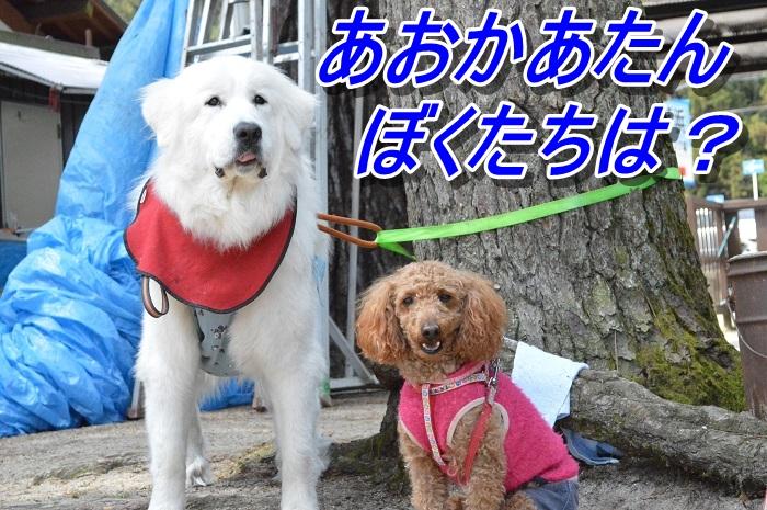 DSC_0220_20130512154955.jpg