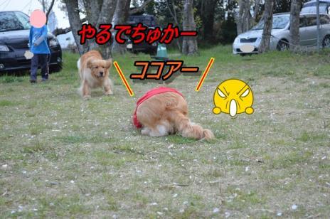 DSC_02233.jpg