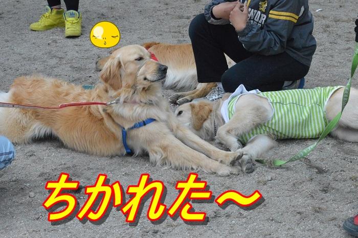 DSC_0298_20130514225033.jpg