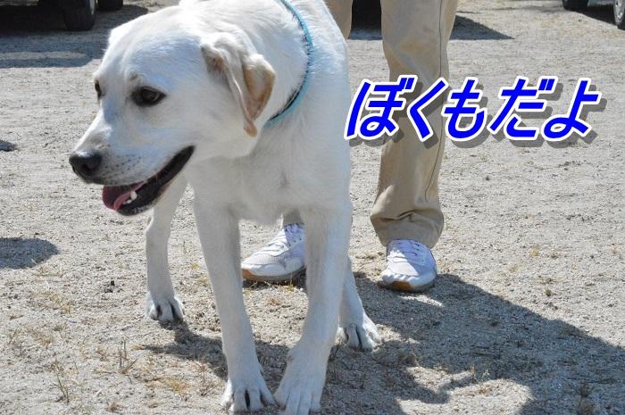 DSC_0314_20130507112411.jpg