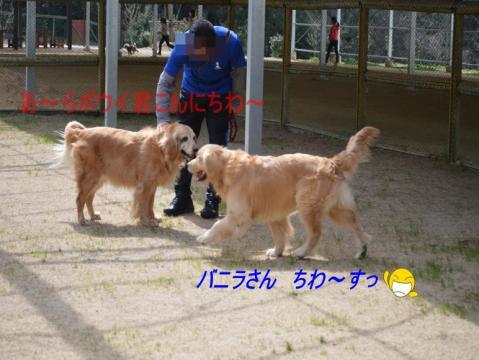 DSC_0323_convert_20130318211926.jpg