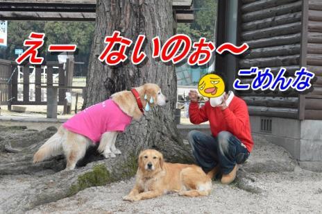DSC_0328_20130515212140.jpg