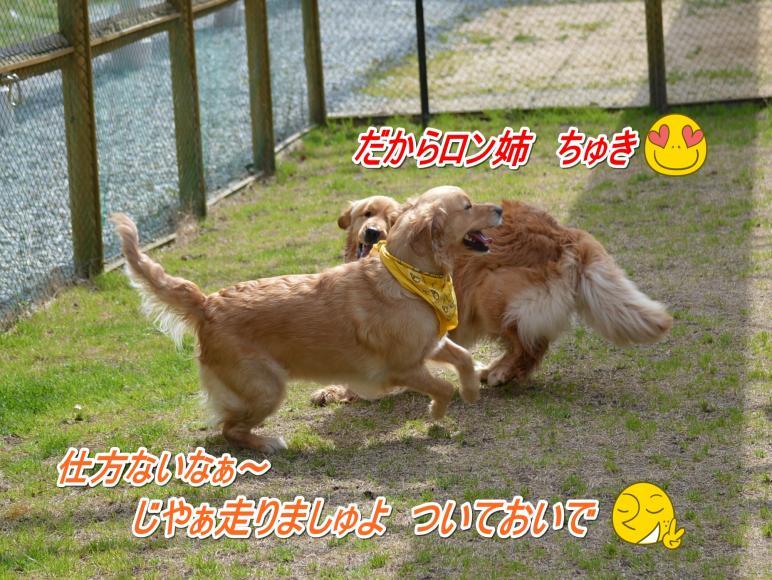 DSC_0335_convert_20130318212340.jpg