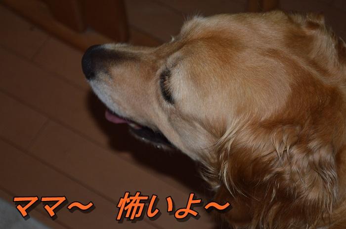 DSC_0341_20130704215550.jpg