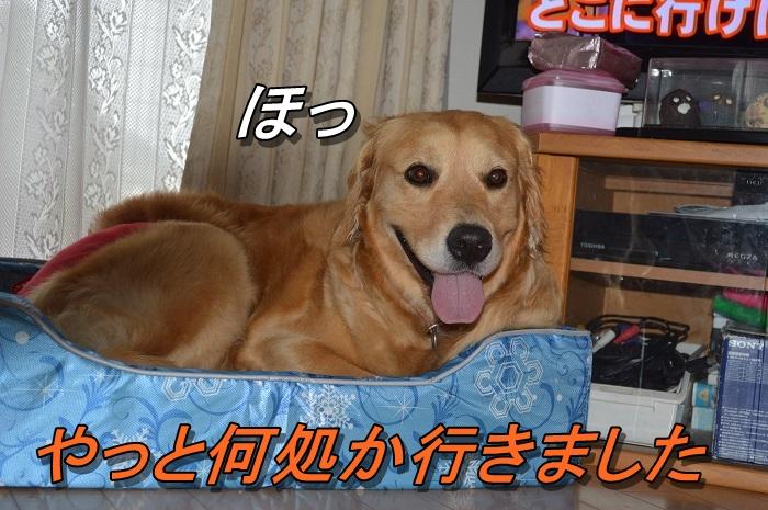 DSC_0344_20130704215550.jpg
