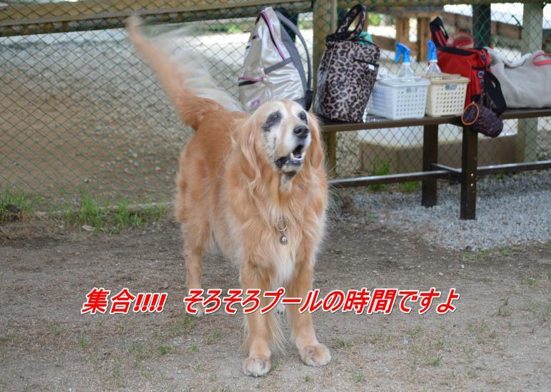 DSC_0345_convert_20130318213202.jpg
