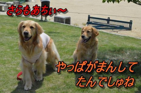 DSC_0346_20130528140427.jpg
