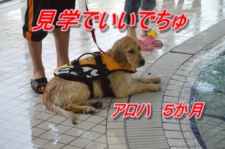 DSC_0351_20130502195229.jpg