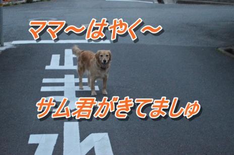 DSC_0376_20130517120843.jpg