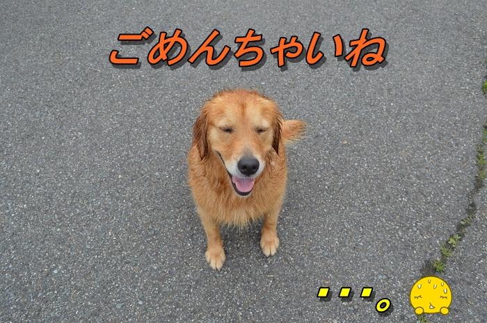DSC_0376_20130706195236.jpg