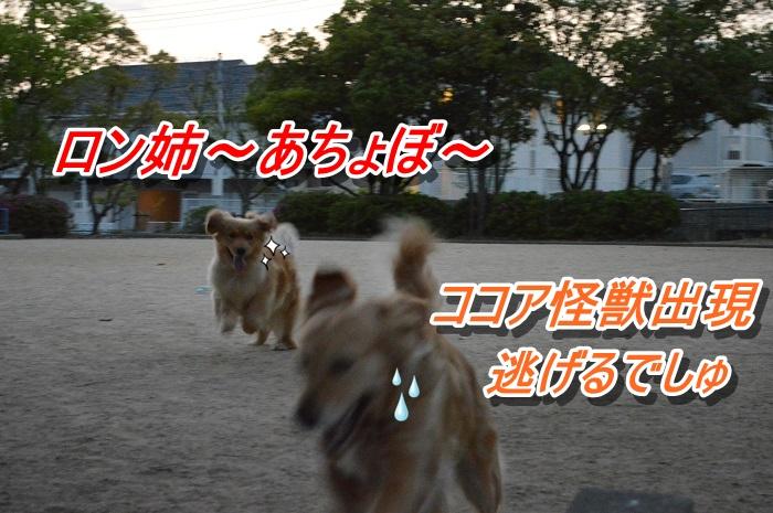DSC_0383.jpg