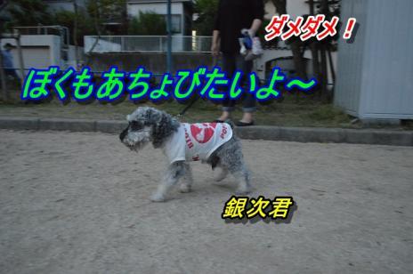 DSC_0399_20130517120841.jpg