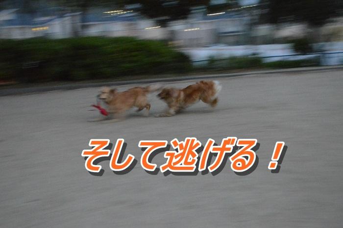 DSC_0413_20130517120841.jpg