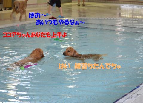 DSC_0429_convert_20130319213348.jpg