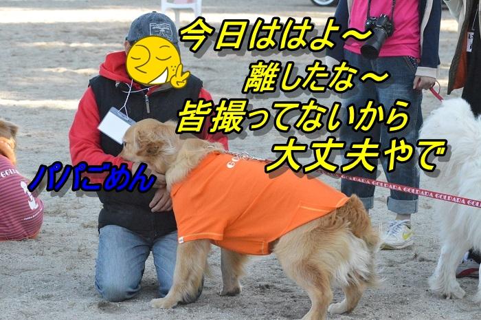 DSC_0433_20130507115449.jpg