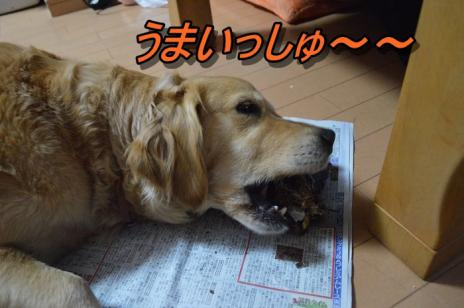 DSC_0438_20130528140554.jpg