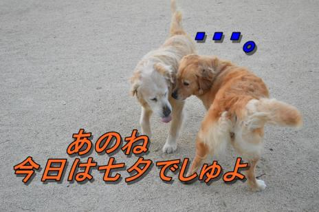 DSC_0462_20130707214930.jpg