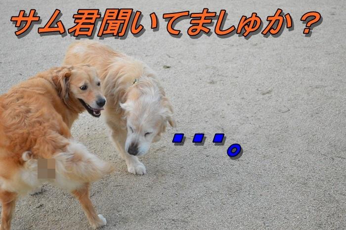 DSC_0466_20130707215011.jpg