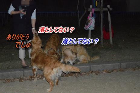 DSC_0468_20130517121413.jpg